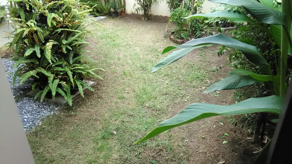 diyสวนหลังบ้าน2